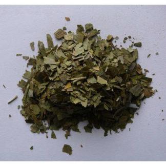 Ginkgo feuilles