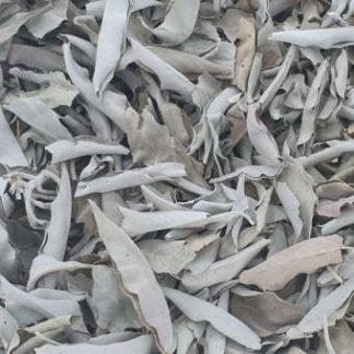 Feuilles sauge blanche