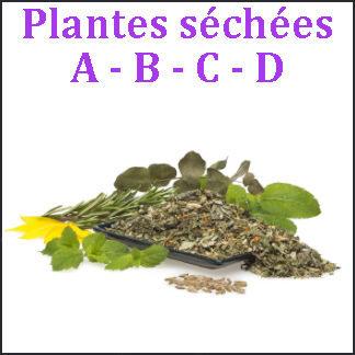 Plantes A-B-C-D