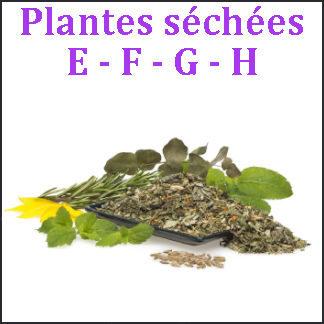 Plantes E-F-G-H