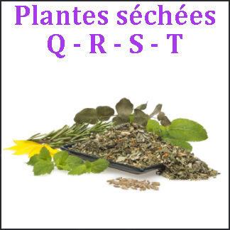Plantes Q-R-S-T