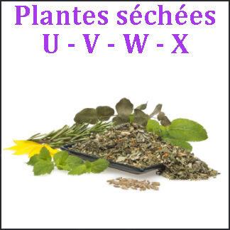 Plantes U-V-W-X