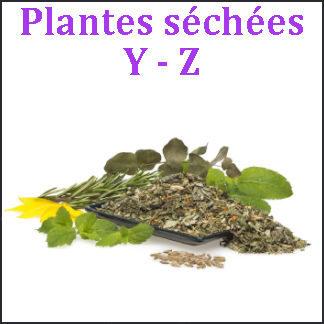 Plantes Y-Z